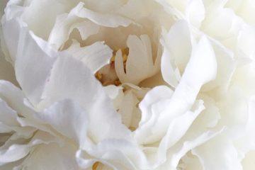 Статья Как устранить неприятные запахи в жилом помещении?